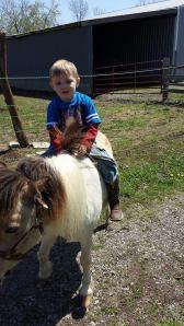 owen horse allergy